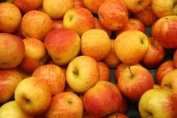 apples-1538775